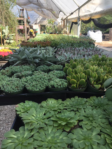 These Days Almost Every Plant Nursery And Home Improvement Carries A Large Selection Of Succulents To Choose From Along With The Necessary Supplies