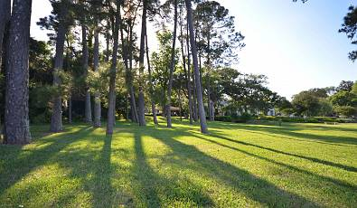 Beautiful treed lot with skyline views