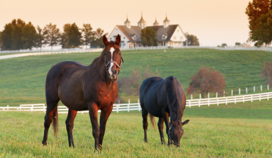 Open House: A Glimpse of Horse Country