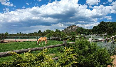 Ride in Style: Luxurious Equestrian Properties